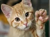 En noviembre continúan esterilizaciones caninas y felinas en Soacha