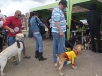 Plan de choque en Portal del Nogal para atenuar matanza de caninos
