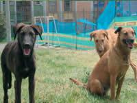 Estudiante U. Nacional realiza tesis sobre perros callejeros de San Mateo-Soacha