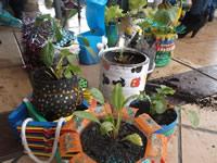 EcoRed promueve productos sostenibles mediante huertas caseras