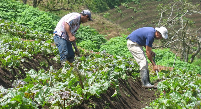 Gobierno ayudará a  agricultores de Cundinamarca