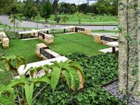 Jardines de Paz crea proyecto para preservar los bosques nativos