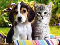 Inician jornadas de esterilización canina y felina en Soacha