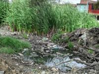Alerta por alta contaminación en humedal Tierra Blanca