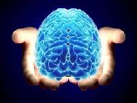 El cerebro adulto sí fabrica neuronas