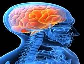 A los 20 años la proteína del alzhéimer se acumula en el  cerebro