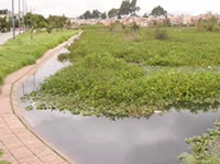 Desafío ambiental se realiza este 20 de marzo