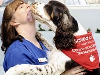 ¿Los animales pueden donar sangre?