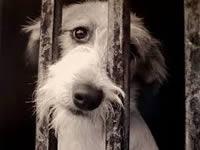 Multas y cárcel podrían pagar maltratadores de animales