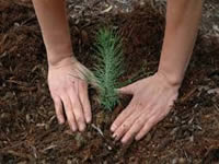 Se reforestarán predios cercanos al Salto del Tequendama