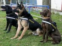 Escuadrón canino evitará tráfico de animales