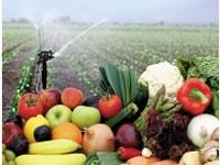 Colombia espera aumentar exportaciones de frutas y hortalizas
