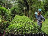 Sector cafetero de Cundinamarca recibirá millonarios beneficios
