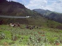 Se suspende aspersión con glifosato en cultivos ilícitos de Colombia