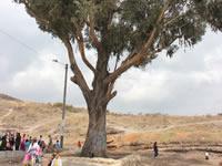 Día de la Madre en el árbol del amor de Soacha