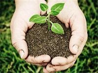 Icetex entregará becas para estudiar ciencias agrícolas en Egipto