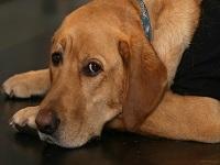 Los perros rechazan a quienes son antipáticos con sus dueños