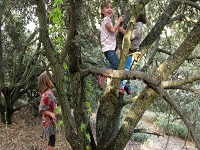 Contacto con la naturaleza mejora el rendimiento cognitivo de los niños
