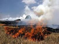 Bomberos logran controlar incendio forestal en límite sur de Soacha