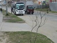 En San Mateo Soacha  mueren 300 árboles