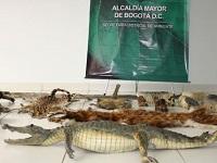 Bogotá da golpe a traficantes de especies silvestres