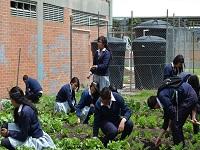 Estudiantes de la IED Pablo Neruda consolidan huerta escolar