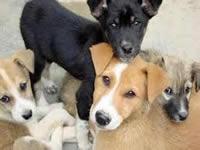 En Faca esterilizan caninos y felinos callejeros