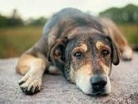 En Ciudad Verde,   jornada de alimentación a perros callejeros