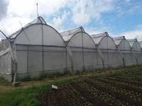 Se fortalecerá el sector floricultor en Cundinamarca