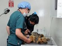 Nuevo modelo para esterilizar perros y gatos de la calle