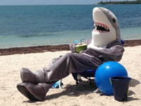 Mundo tiburón de Discovery Kids visita Soacha