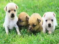 Bayer participará en el Congreso Mundial de la Asociación Veterinaria de Animales Pequeños