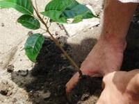 14 mil árboles fueron sembrados en memoria de las víctimas del conflicto
