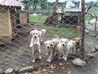 Refugio de animales en Cundinamarca busca solidaridad