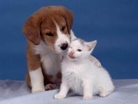 Comuna dos de Soacha tendrá festival canino y felino