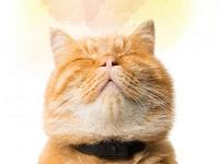 Conozca la función de los bigotes de los gatos