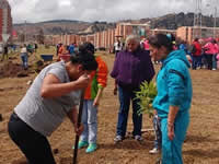 9.200 árboles se han plantado en Soacha durante  los Viernes Verdes