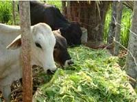 Gobernación entregó 3.500 toneladas de alimento para ganado
