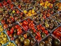 En la nevera los tomates pierden su sabor