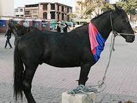 En Soacha comienza proceso de sustitución de los vehículos de tracción animal