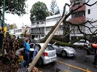 Riesgo por falta de estudios sobre situación de árboles en Bogotá