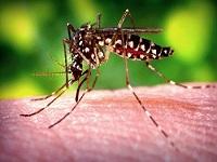 Declaran fin de emergencia por virus de Zika