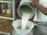 En Soacha se impulsará la producción de leche