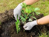 938 árboles fueron sembrados en Vianí, Cundinamarca