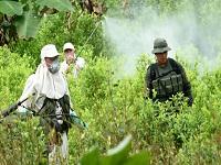 Fue aprobada la fumigación manual de cultivos ilícitos