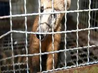 Durante el año fueron presentadas 406 denuncias por casos de maltrato animal