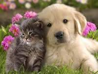 En su barrio pueden empezar  jornadas de esterilización canina
