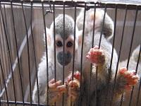 Operativos contra el tráfico de animales silvestres en terminal sur