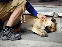 Envenenamiento masivo de mascotas en Bogotá