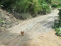 Con dinero del posconflicto se arreglarán vías rurales en Soacha